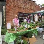 Street Fair 16 - plants